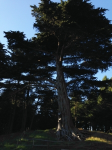 Better Tree of Life [Golden Gate Park]